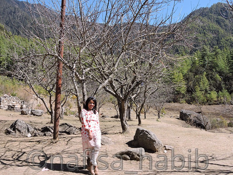 apple trees at taktsang - Five Must Visited Place in Paro, Bhutan