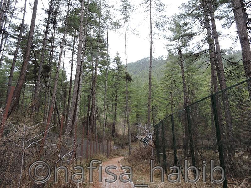 Motithang Takin Preserve, Thimphu