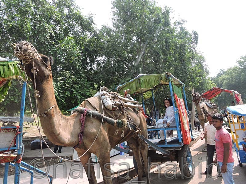 Agra Camel Cart Ride