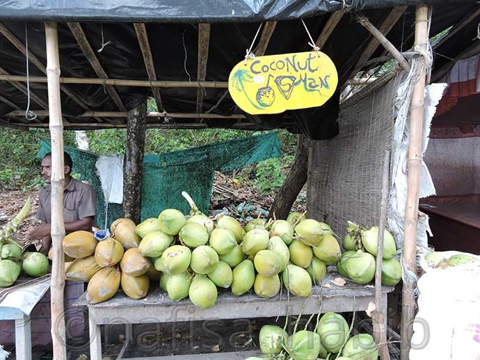 Coconut Stall in Havelock Island