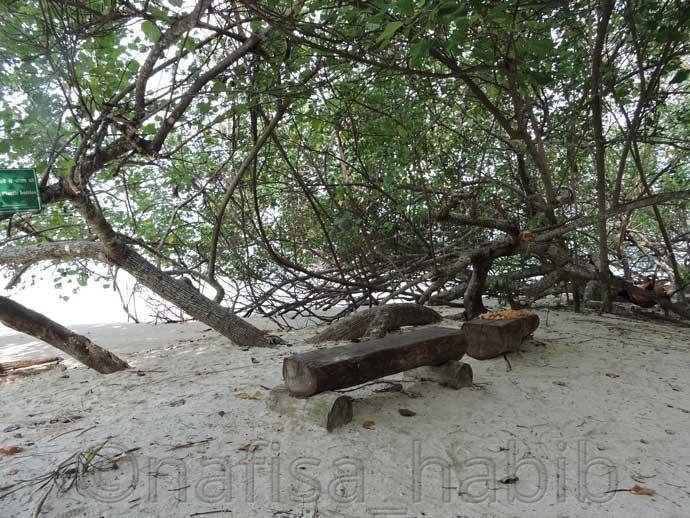 Fallen trees, Kalapathar beach