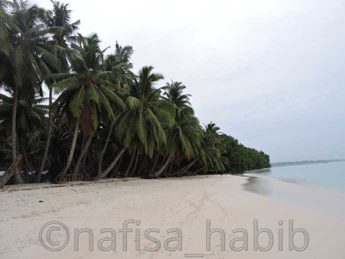 The Rows of Coconut Trees in the Beautiful Vijaynagar Beach