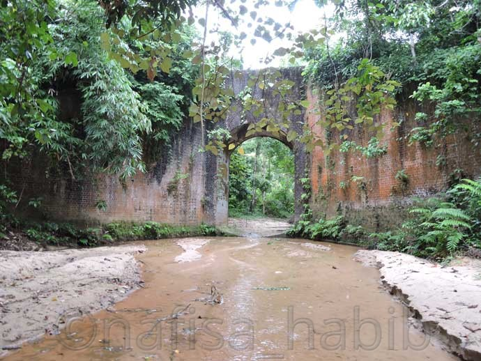 Emperor Gate at Lawachara Rain Forest