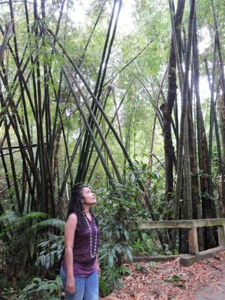 Exploring the bamboo groves at Lawachara National Park - Three Hours Adventure at Lawachara Rain Forest in Sylhet, Bangladesh