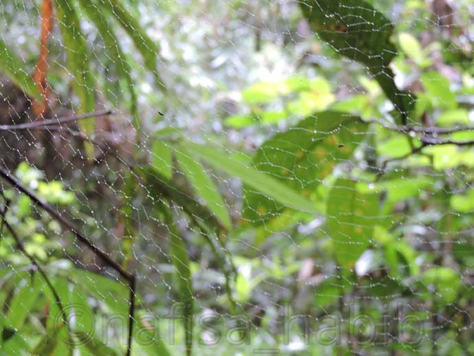 Spider Net at Lawachara Forest - Three Hours Adventure at Lawachara Rain Forest in Sylhet, Bangladesh
