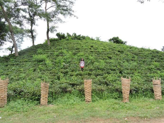 Madhabkunda Tea Garden