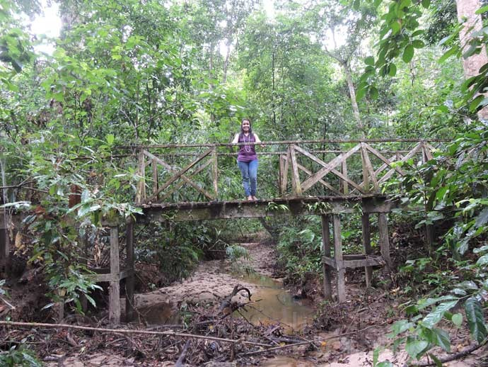 Wooden Bridge at Lawachara Forest
