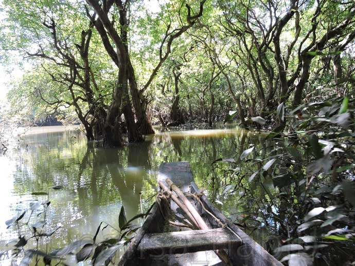 Boating at Ratargul Forest