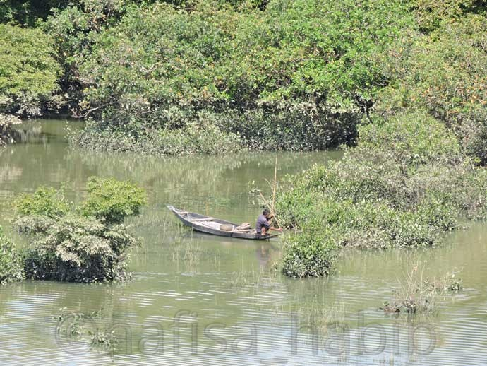 Catching Fish at Ratargul Swamp Forest  - Most Beautiful Ratargul Swamp Forest in Sylhet, Bangladesh
