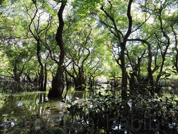 Ratargul Swamp Forest in Sylhet - Most Beautiful Ratargul Swamp Forest in Sylhet, Bangladesh