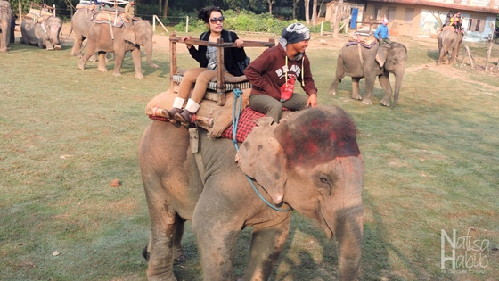 Elephant Safari at Chitwan National Park