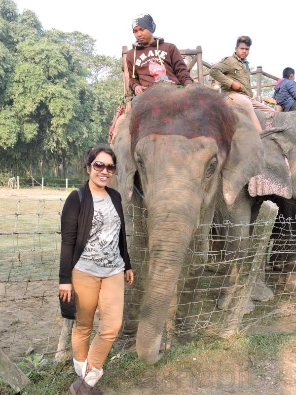 Jungle #Safari at #Chitwan #NationalPark to explore the #wildlife #adventure in #Nepal. #travelnepal #chitwannationalpark #elephantsafari #unescoworldheritage #UNESCO #junglesafari