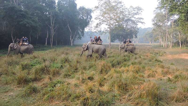 Jungle Safari at Chitwan National Park