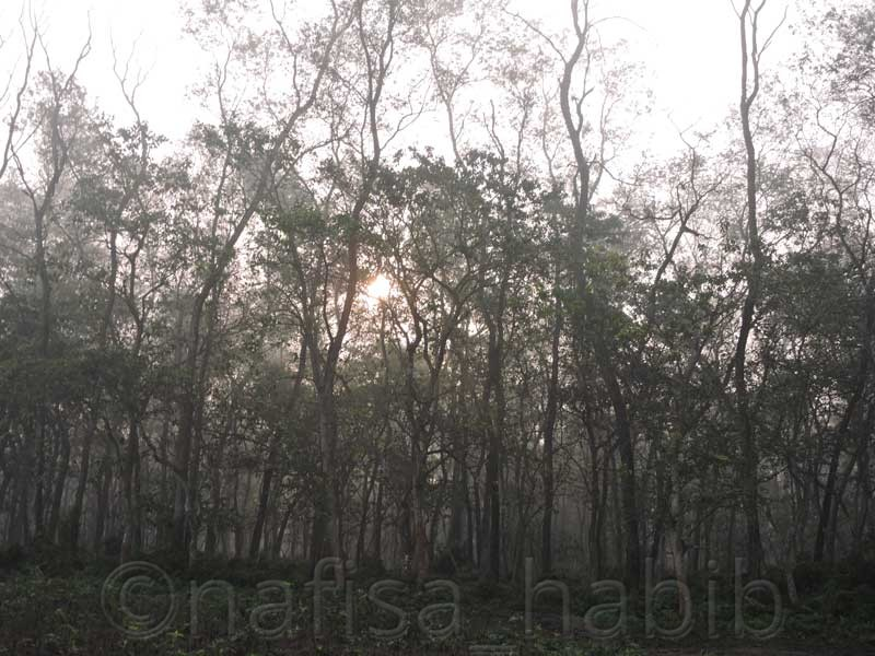 Lush Forest at Chitwan National Park