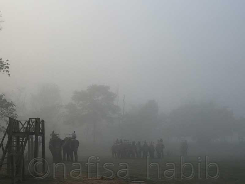 Chitwan Elephant Booking Point