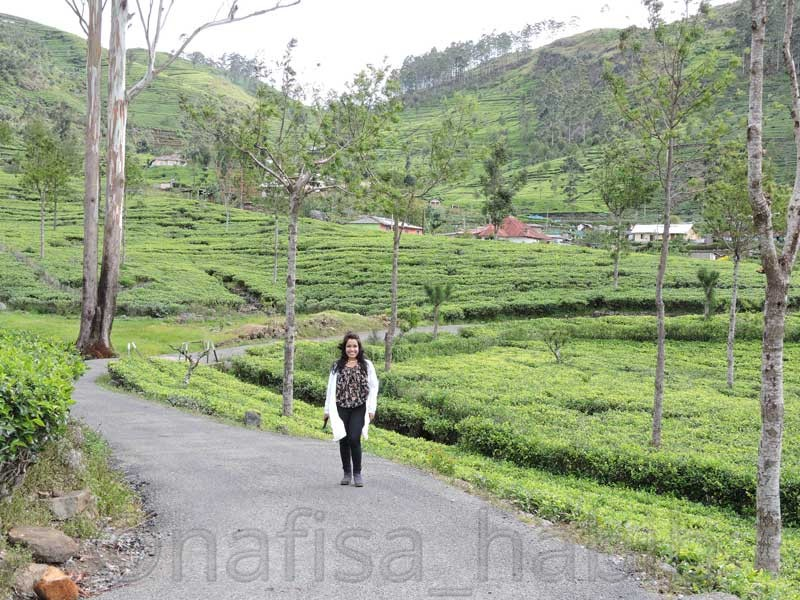 Dambatenne Tea Factory in Haputale - 10 Photos To Inspire You To Visit Sri Lanka