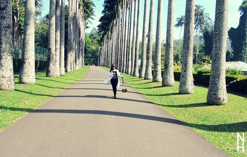 10 Photos To Inspire You To Visit Sri Lanka - Peradeniya Royal Botanic Gardens
