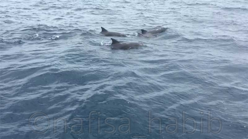 Dolphin Cruise in the Maldives - 10 Photos To Inspire You To Visit The Maldives