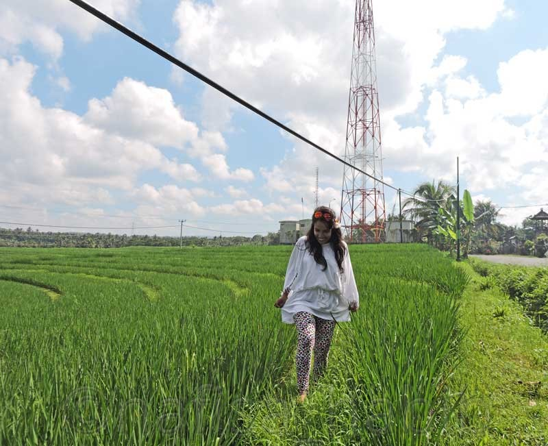 Lush Green Rice Terrace in Gulingan  - 10 Photos To Inspire You To Visit Bali