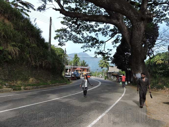 Beautiful Road in Sri Lanka - 6 Top Travel Destinations In Sri Lanka To Explore