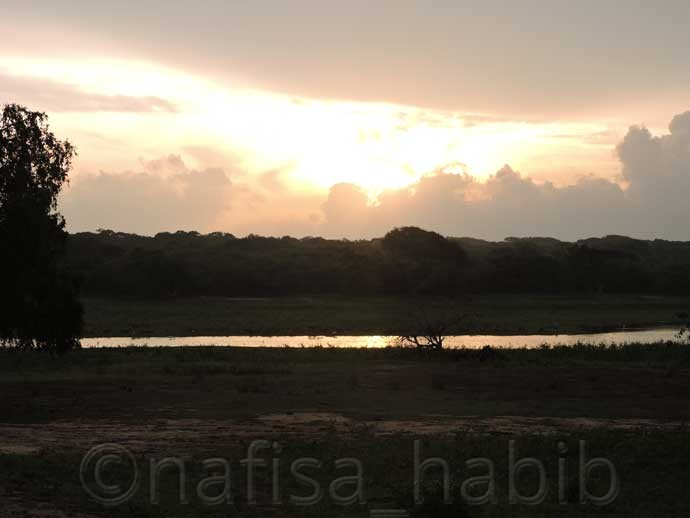 Beautiful Sunrise at Yala National Park