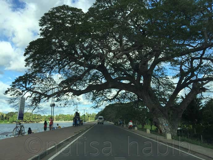 Beautiful road of Tissamaharama in Sri Lanka