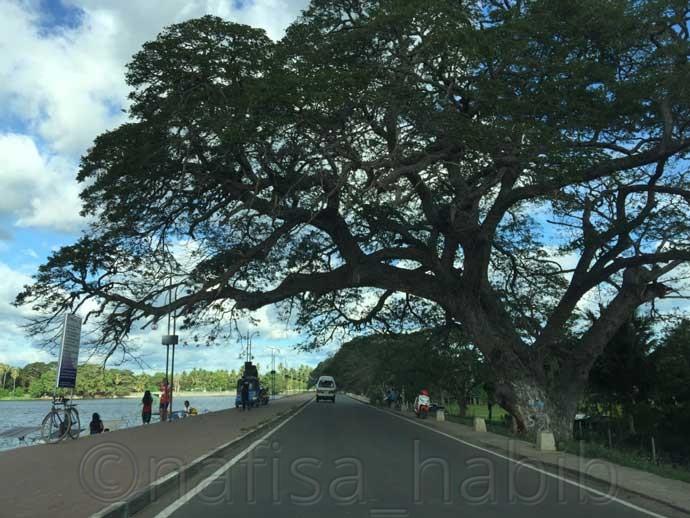 Beautiful road of Tissamaharama in Sri Lanka