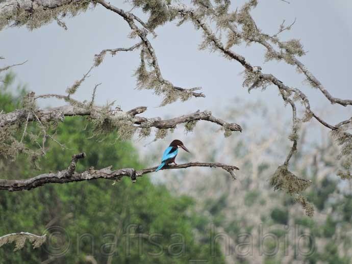 Kingfisher at Yala National Park - Three Hours Jeep Safari Tour at Yala National Park in Sri Lanka