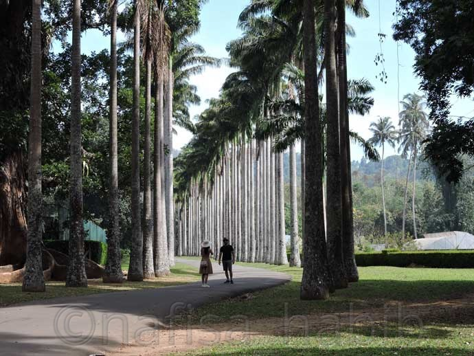 Palm Avenue at Royal Botanic Gardens  - 6 Top Travel Destinations In Sri Lanka To Explore