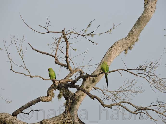 Parrots at Yala National Park