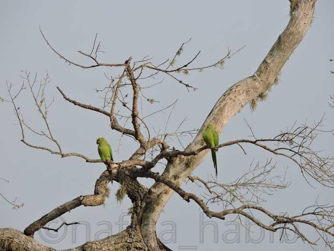 Parrots at Yala National Park - Three Hours Jeep Safari Tour at Yala National Park in Sri Lanka