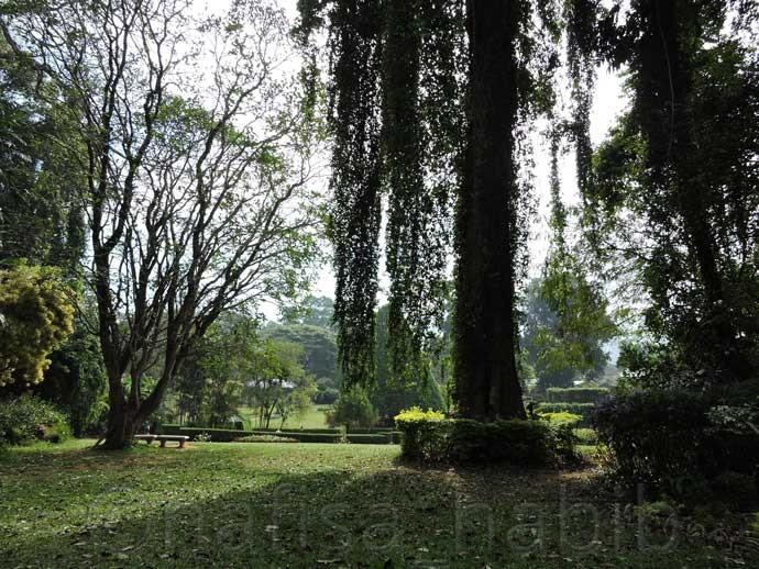Peradeniya Royal Botanic Gardens