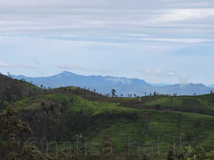 Spectacular Landscape in Haputale