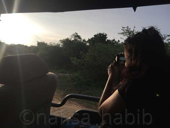 Wildlife Photography at Yala National Park