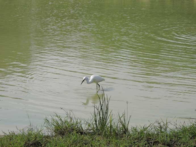 at Yala National Park