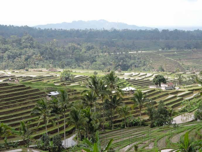 UNESCO World Heritage - Jatiluwih Rice Terrace