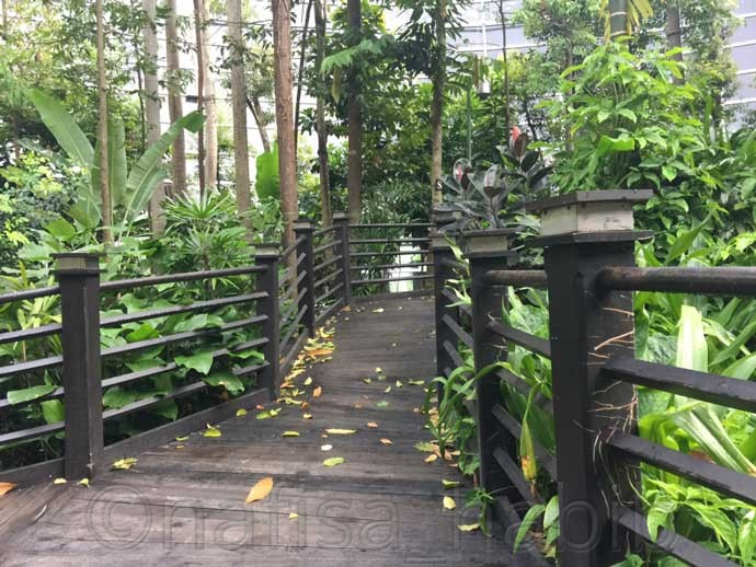 Walkway at Jungle Boardwalk  - 6 Tips To Spend 12-Hour Layover At Kuala Lumpur International Airport