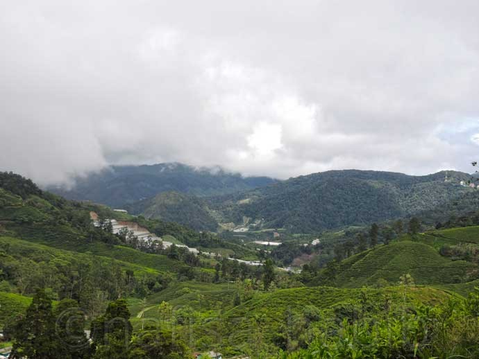 Breathtaking Landscape of Cameron Highlands