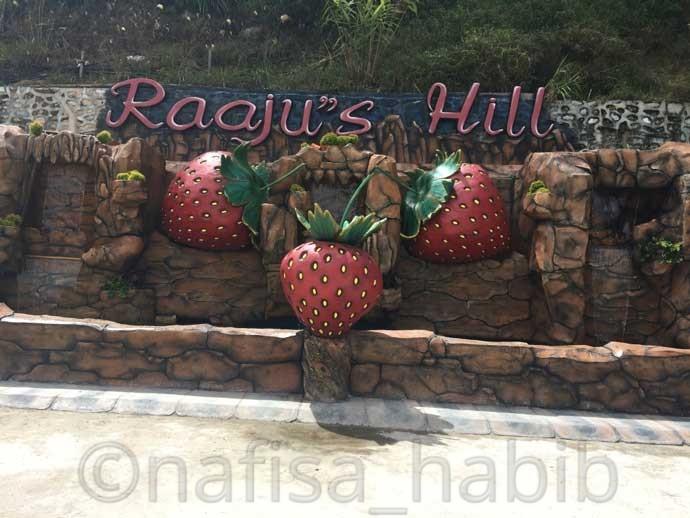 Raaju's Hill Strawberry Farm