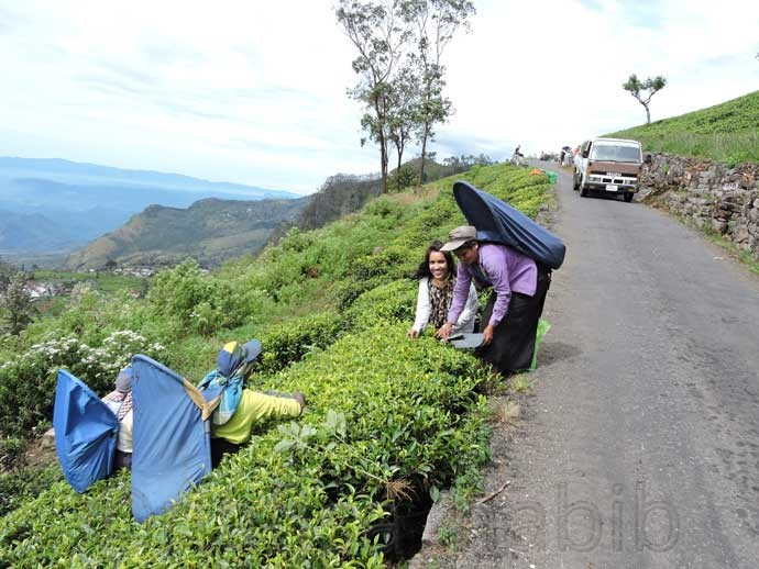 Tea Workers in Dambatenne, Haputale