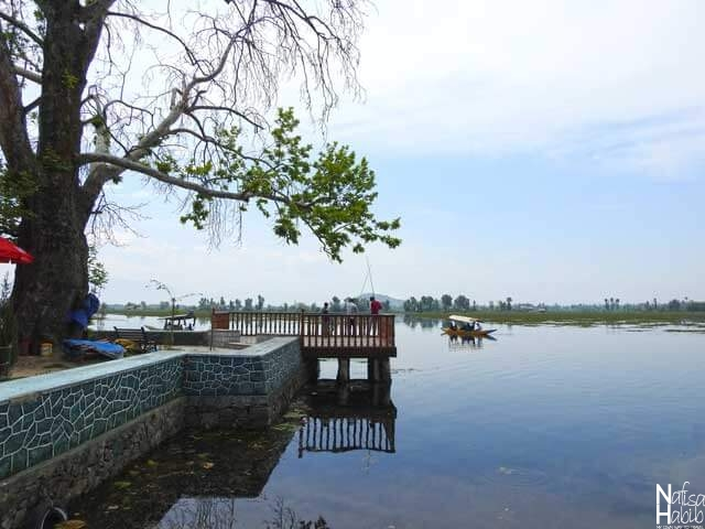 Chinar Tree of the Dal Lake Island of Char Chinar in Srinagar