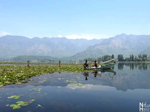 Fishing the popular activities in Kashmir Srinagar Dal Lake