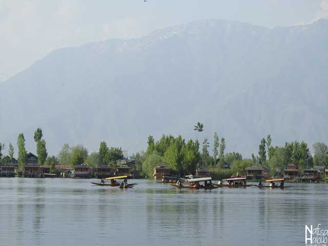 Kashmir Srinagar Dal Lake and Shikaras