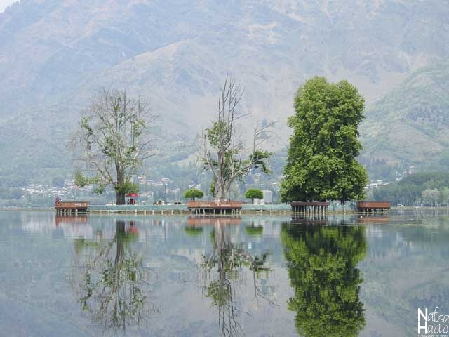 The picturesque island Char Chinar of Dal Lake