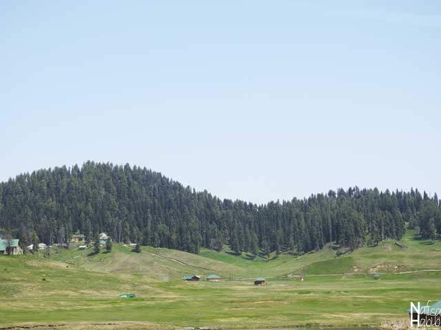 Places to see in Gulmarg - World's Highest Green Golf Course in Gulmarg