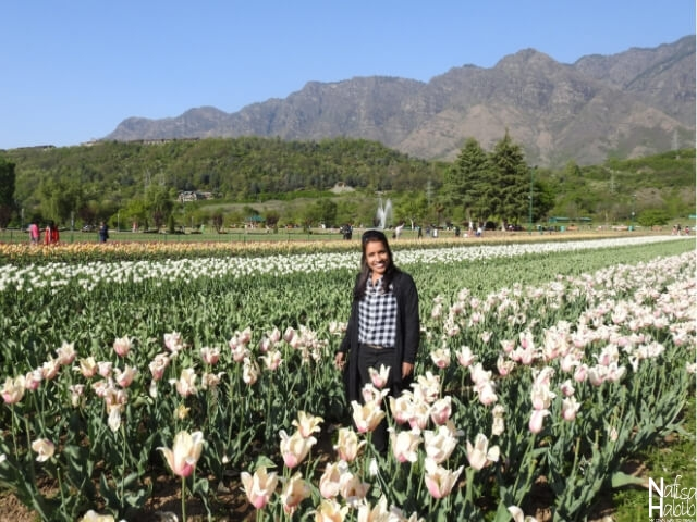 Things To Do in Srinagar - Asia's Largest Indira Gandhi Memorial Tulip Garden