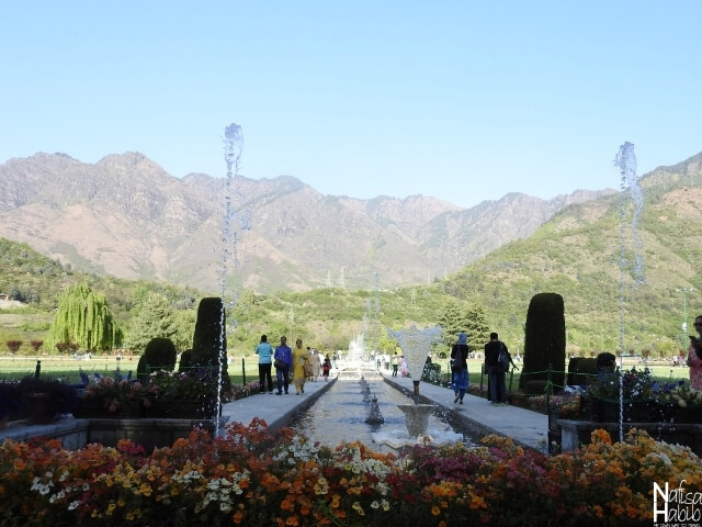 Srinagar India points of interest - Indira Gandhi Memorial Tulip Garden Srinagar