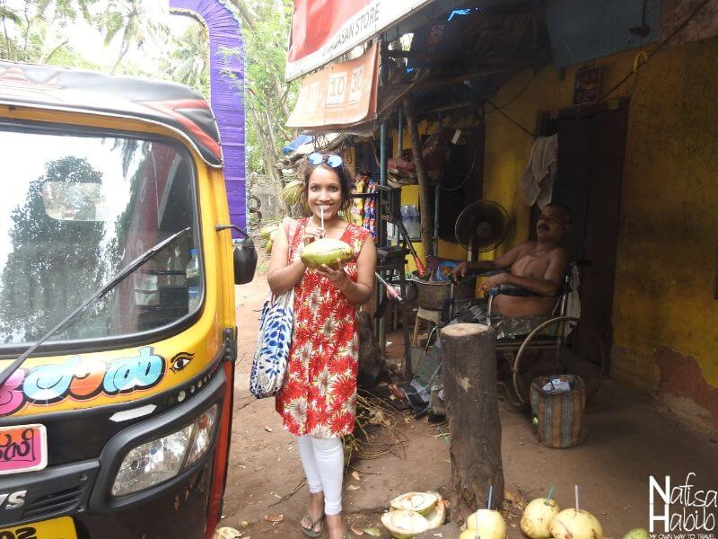 Drinking coconut water from a grove of coconut trees Kovalam beach town