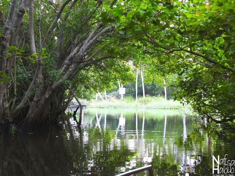 Mangroves in the Poovar Island