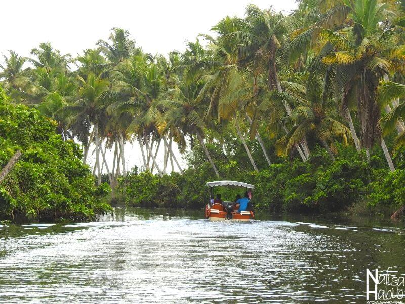 Poovar Backwaters Cruise by Boat